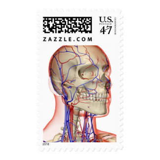 Arteries and veins in the head and neck postage stamp