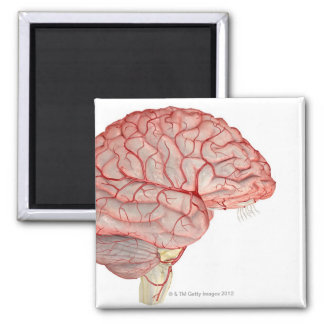 Arteries of the Brain 2 Inch Square Magnet