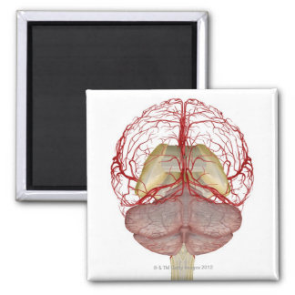 Arteries of the Brain 2 Magnet