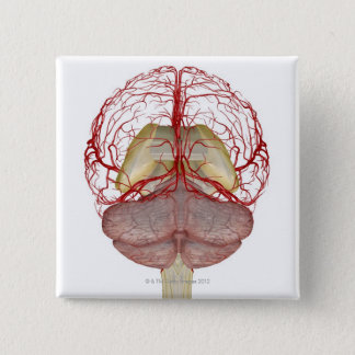 Arteries of the Brain 2 Pinback Button