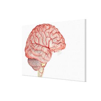 Arteries of the Brain 3 Canvas Print