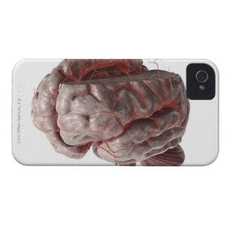 Arteries of the Brain 3 iPhone 4 Case-Mate Case