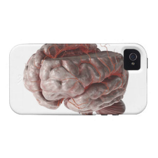 Arteries of the Brain 3 Vibe iPhone 4 Covers