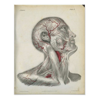 Arteries of the Head & Neck Anatomy Print