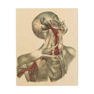 Arteries of the Neck and Shoulder Wood Prints