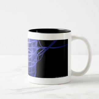 Arteries surrounding part of the spinal column Two-Tone coffee mug