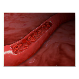 Artery Cross Section With Red Blood Cell Flow Poster