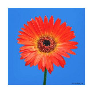 Artful Gerbera Daisy Stretched Canvas Print