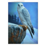 Artic Falcon Greeting Card