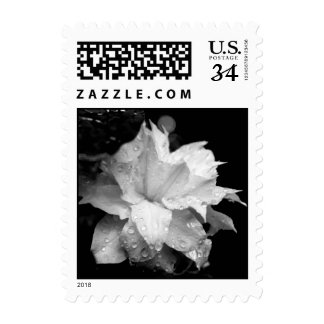 Artic Queen Clematis Floral Photography Postage
