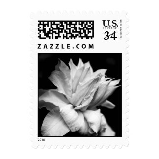 Artic Queen Clematis - Floral Photography Postage