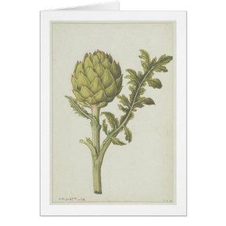 Artichoke: Cynara scolymus, c.1568 Card