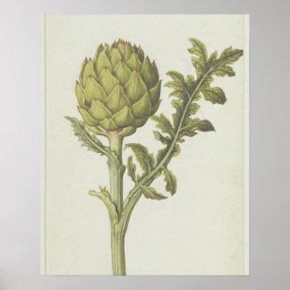 Artichoke: Cynara scolymus, c.1568 Poster