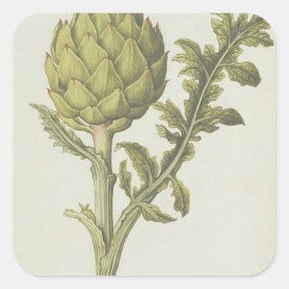 Artichoke: Cynara scolymus, c.1568 Square Sticker