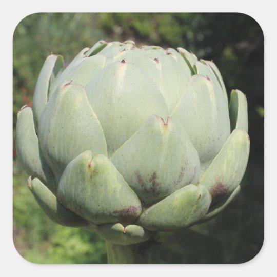 Artichoke Plant. Square Sticker