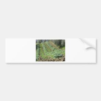 Artichokes plantation on rolling hills bumper sticker