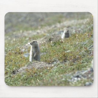 Article ground squirrell mouse pad