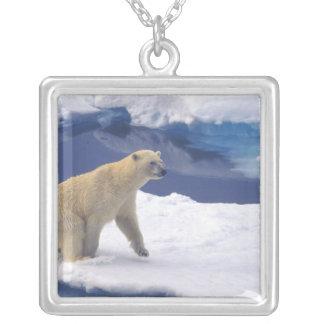 Ártico, Svalbard, morsa que es amistosa Colgante Cuadrado