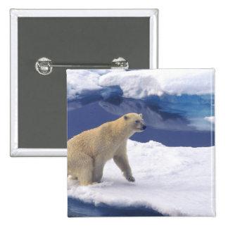 Ártico, Svalbard, morsa que es amistosa Pin Cuadrada 5 Cm