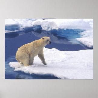 Ártico, Svalbard, morsa que es amistosa Póster