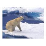 Ártico, Svalbard, morsa que es amistosa Tarjeta Postal