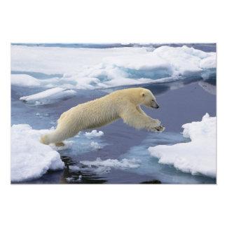 Ártico, Svalbard, oso polar que extiende y Fotografías