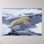 Ártico, Svalbard, oso polar que extiende y Póster