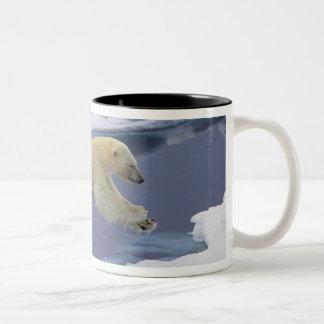 Ártico, Svalbard, oso polar que extiende y Tazas De Café