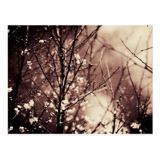 Artículo oscuro del flor del albaricoque tarjeta postal