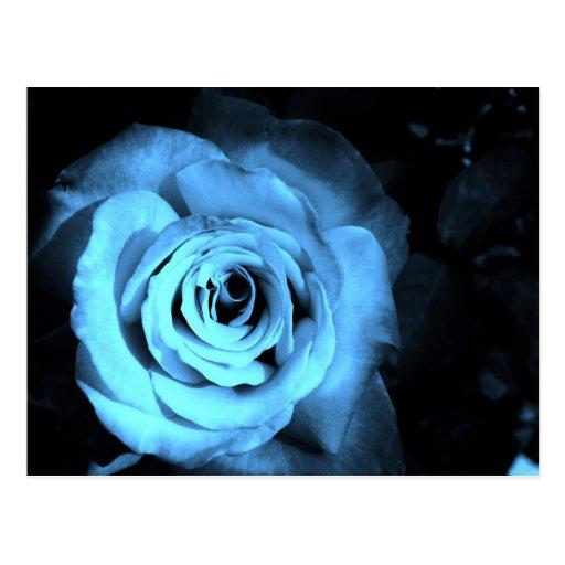Artículos color de rosa azules postales