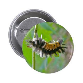 Artículos de Caterpillar de la polilla de mechón d Pin