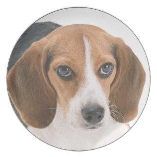 """Artículos de cocina del diseño del """"beagle"""" plato"""
