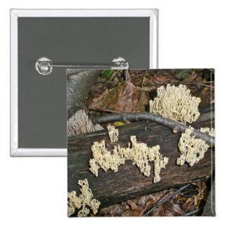 Artículos de coordinación de la seta coralina pin cuadrada 5 cm