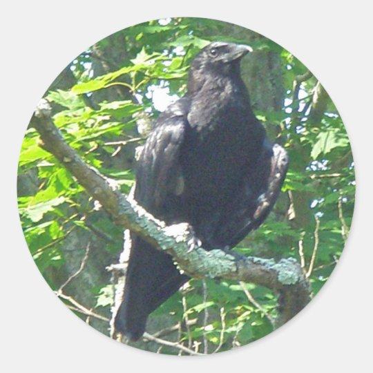 Artículos de coordinación del cuervo pegatina redonda