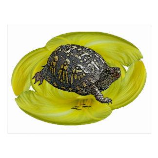Artículos de coordinación del este de la tortuga d postales