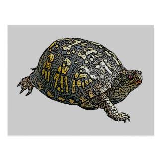 Artículos de coordinación del este de la tortuga d tarjeta postal