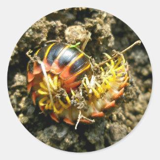 Artículos de Polydesmida del milpiés (aberrans de Pegatina Redonda