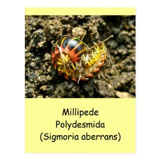 Artículos de Polydesmida del milpiés (aberrans de  Tarjeta Postal
