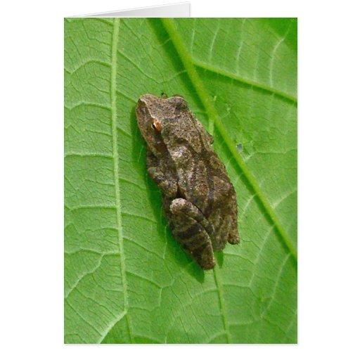 Artículos de Treefrog del atisbador de primavera ( Tarjeta De Felicitación