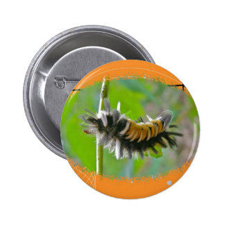 Artículos del naranja de Caterpillar de la polilla Pins