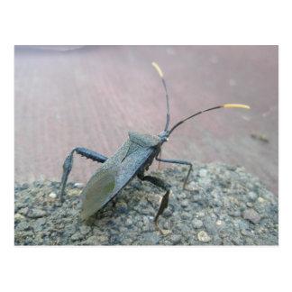 Artículos Hoja-Con base negros adultos del insecto Postales