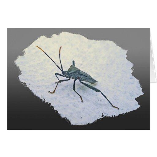Artículos negros adultos del insecto de asesino (R Tarjetas