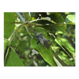 Artículos negros adultos del insecto de asesino (R Tarjetas Postales