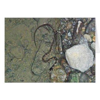 Artículos septentrionales de la serpiente de agua  tarjeta pequeña