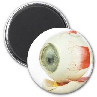Artificial human eye magnet