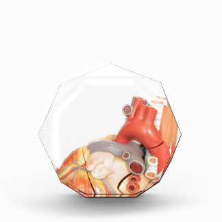 Artificial model of a heart side view award