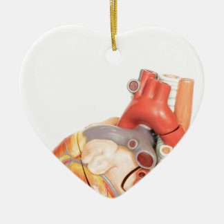 Artificial model of a heart side view ceramic ornament