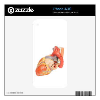 Artificial model of a heart side view iPhone 4S decals