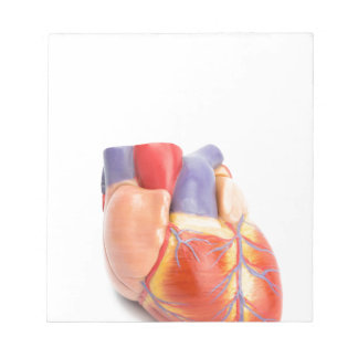 Artificial model of human heart on white.jpg notepad