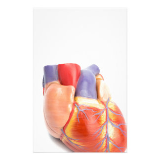 Artificial model of human heart on white.jpg stationery